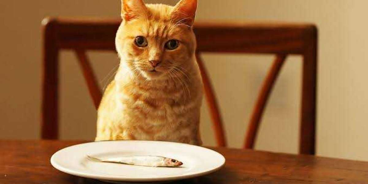 What to give a cat for food