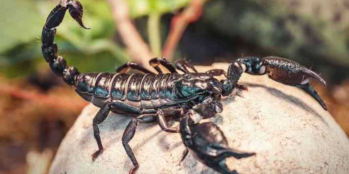 Did you know about Scorpions ?